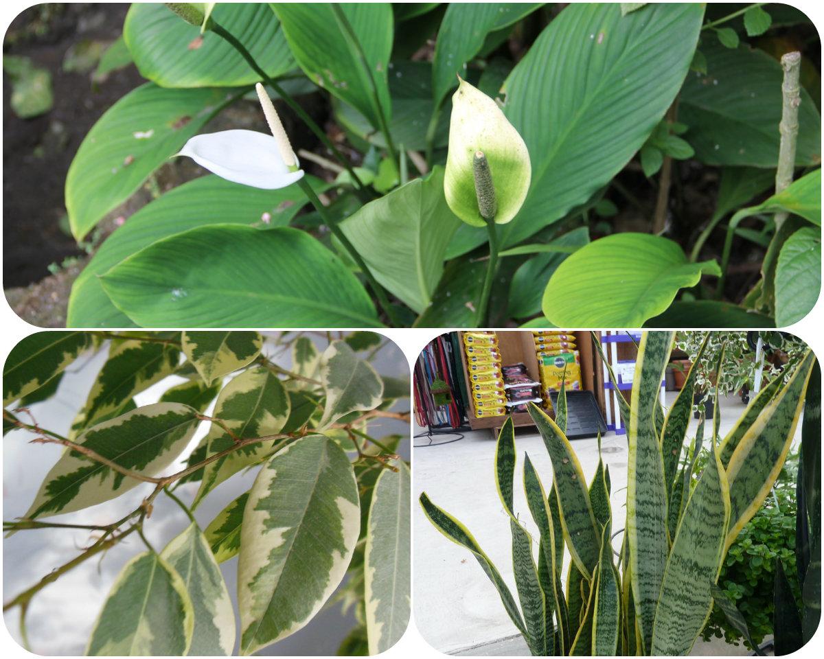 Tri moćna čuvara: Ove biljke morate imati u svom domu tokom zime