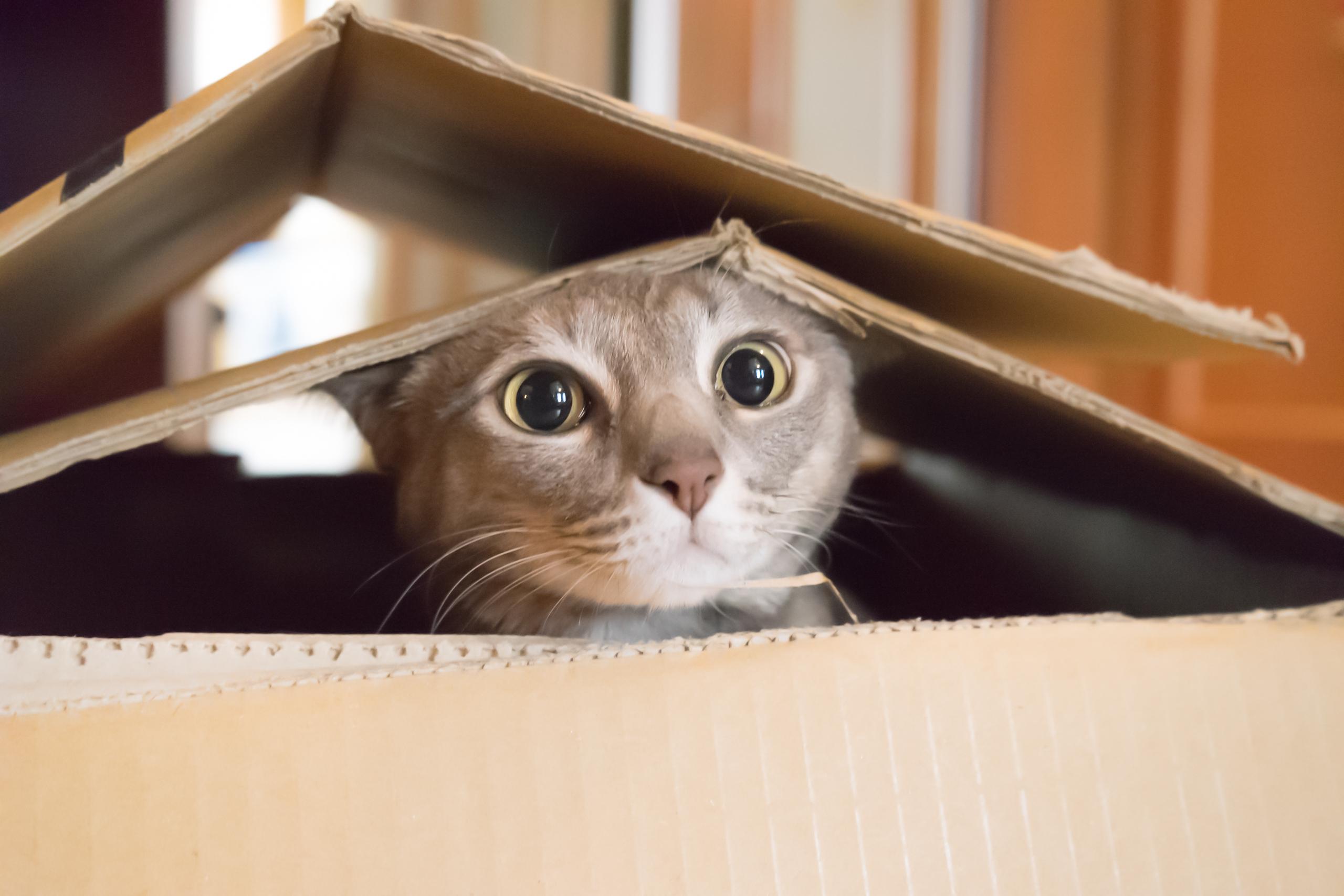 Nahrani me, češkaj, zabavi: Zašto vaša mačka mjauče?