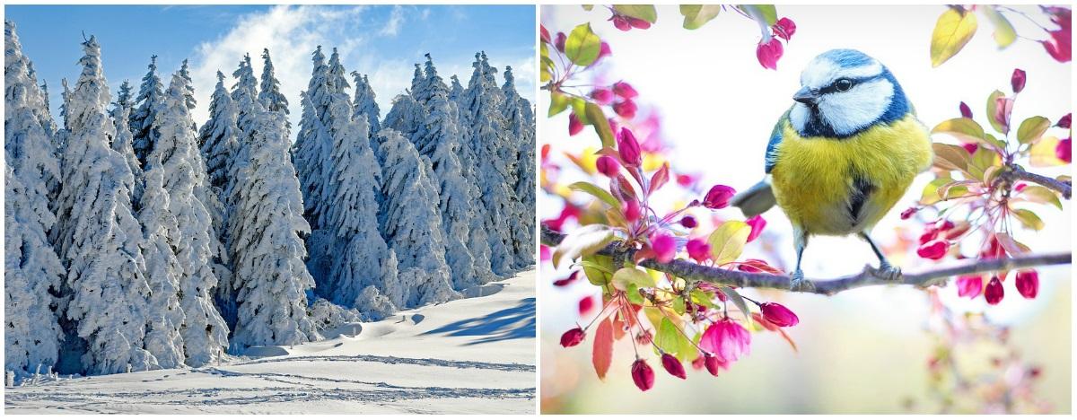 Medved Miša jasno poručio- evo da li je došao kraj zimi (FOTO)