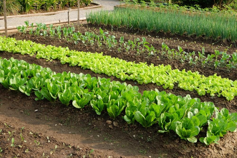 Zoran poklanja pola hektara zemljišta i seme, postoji samo jedan uslov (FOTO)