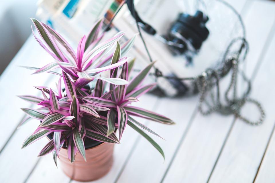 Kućno cveće je počelo da vam vene, a ne znate zašto? Spas je u šibicama!