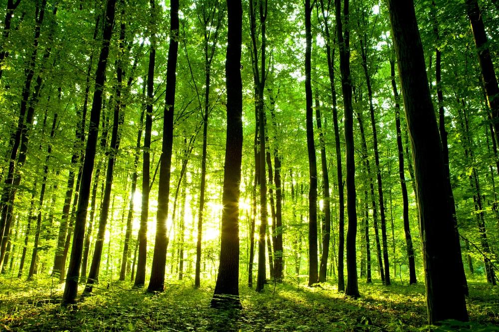 Da budu naša pluća: Mladi Srbin sadi novu šumu kod Čačka
