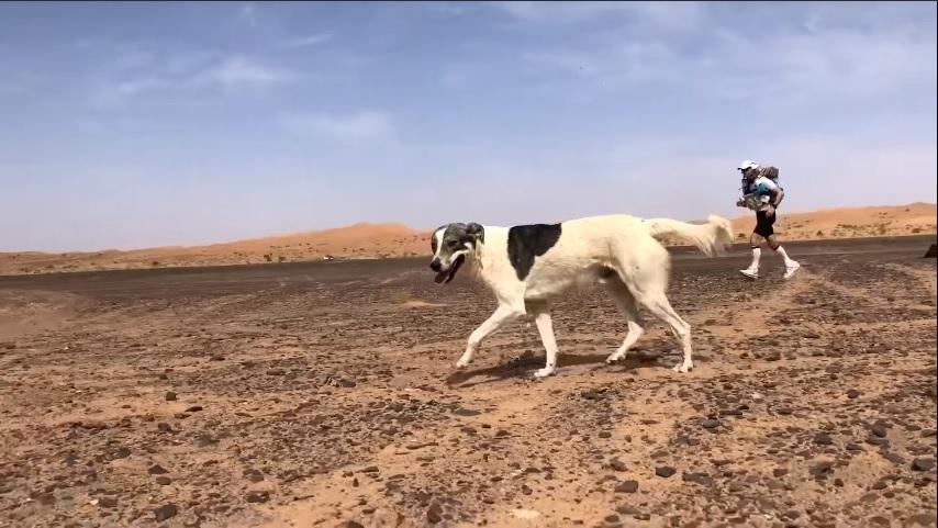 Pas maratonac trčao 160 kilometara jedne od najtežih trka na svetu (VIDEO)