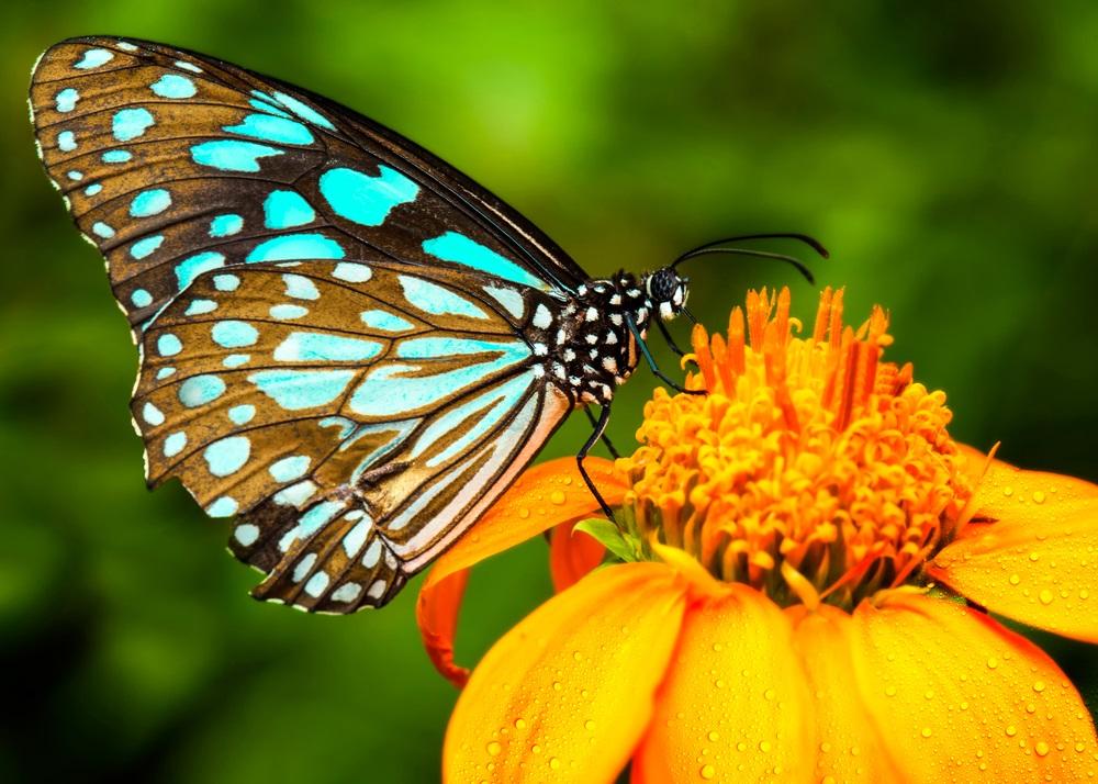 Viđate li često leptire? To može da ima dobro značenje, evo šta vam poručuju