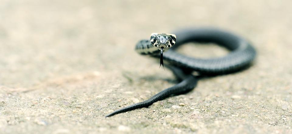 Ovo stavite u svoje dvorište i zmije će vas zaobilaziti u širokom luku