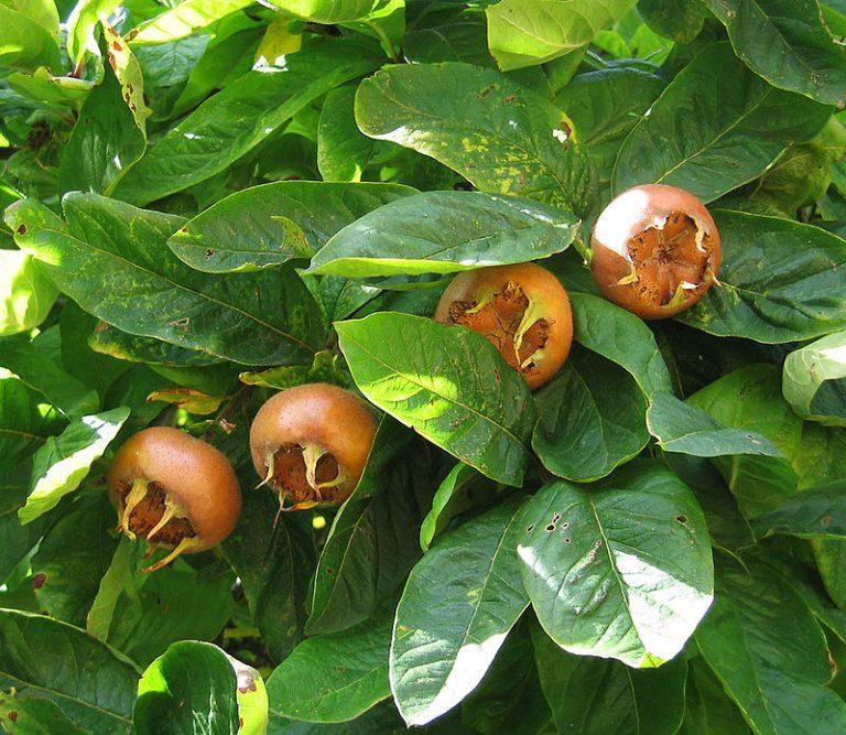 Nepravedno je zapostavljena, a tako lekovita: Da li znate koja je ovo biljka? (FOTO)