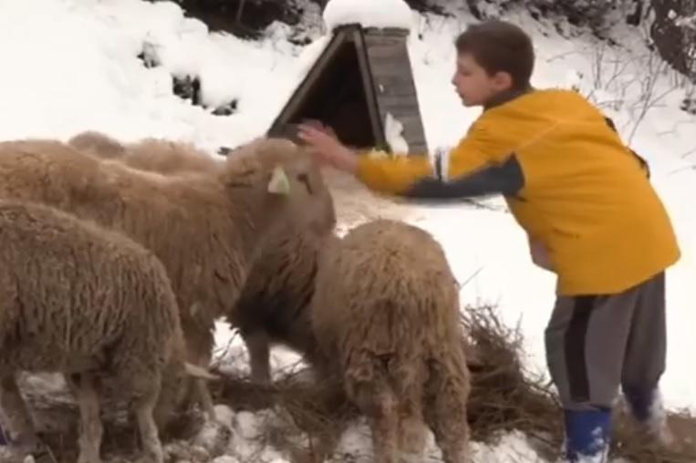 Celo selo ponosi se ovim dečakom: Umesto igračaka devetogodišnjak kupuje jagnjad