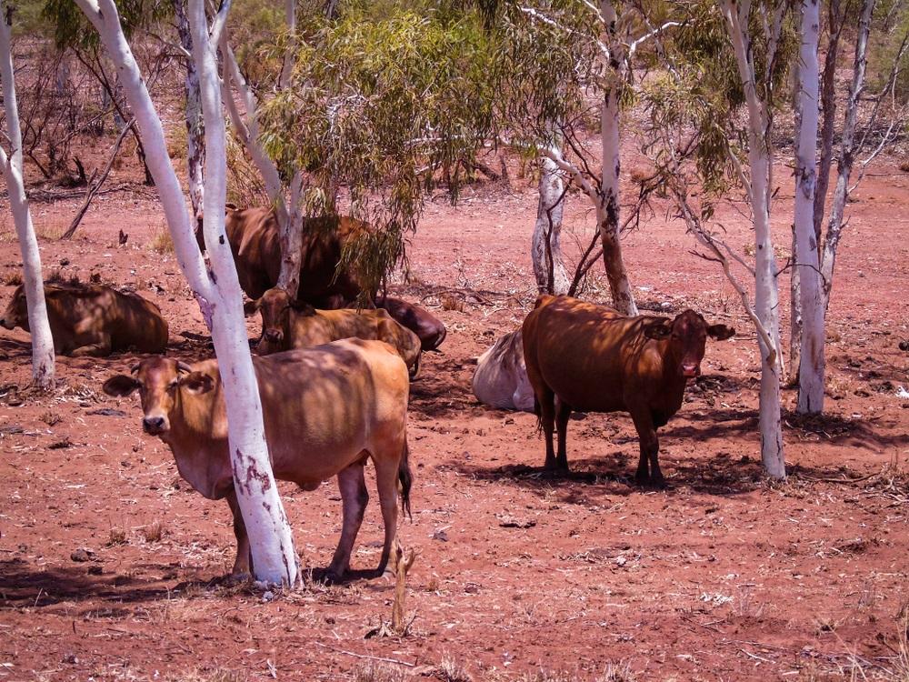 Australija se bori s paklenim temperaturama, koje obaraju sve rekorde