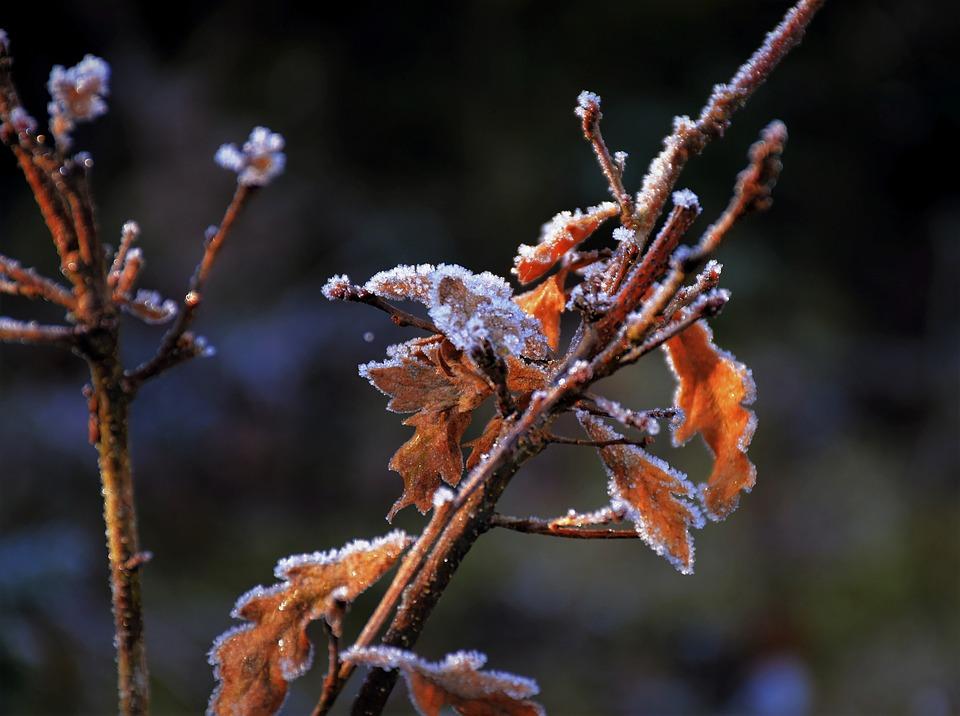 Vremenska prognoza: Popodne stiže naoblačenje, temperatura do 15 stepeni