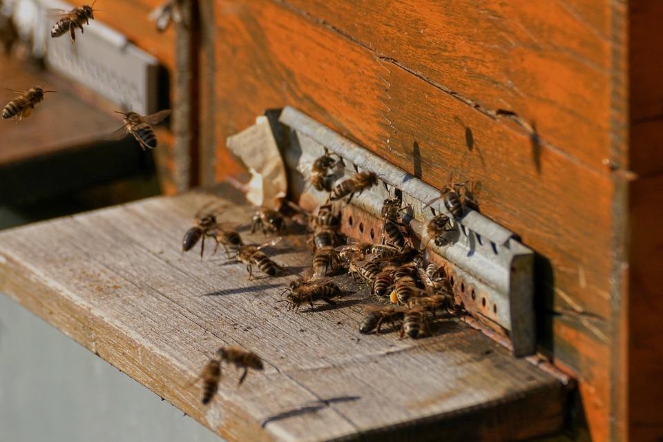 Kada nestanu pčele, za četiri godine će nestati i čovečanstvo