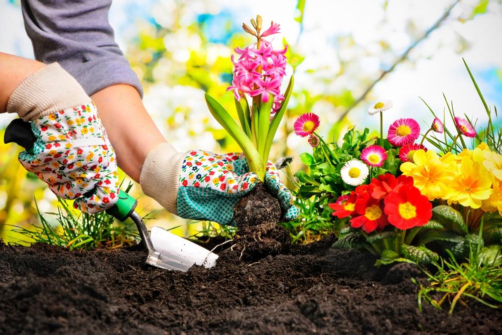 Vreme je za sadnju: Sedam prolećnih vrsta cveća za vašu baštu (FOTO)