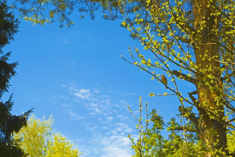 Danas sunčano i toplo, mogućnost pljuskova s grmljavinom, do 28 stepeni