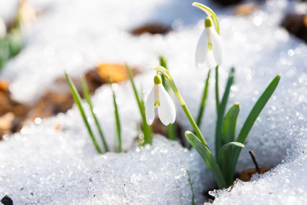 Vremenska prognoza: Prvog dana maja kiša, grmljavina i sneg