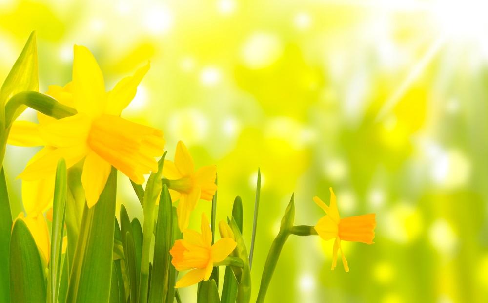 Vremenska prognoza: Veći deo dana toplo i sunčano, a uveče stiže novo naoblačenje