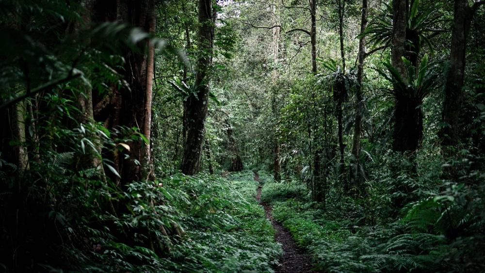 Kamere u prašumi snimile prvi put ovu životinju koja je jedina na svetu te vrste (FOTO)