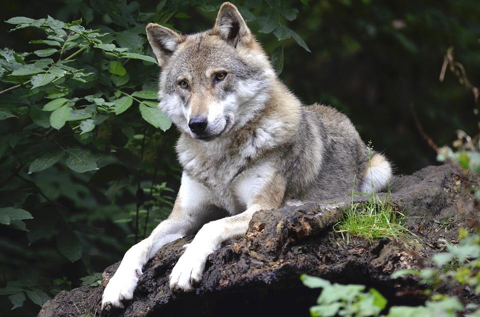 U svakome od nas se bore dva vuka, pazite kog hranite, može vam se obiti o glavu